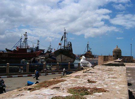 Dérive atlantique sur les rivages d'Essaouira