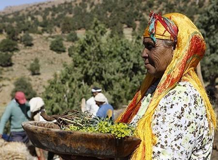 Rencontres en terres berbères