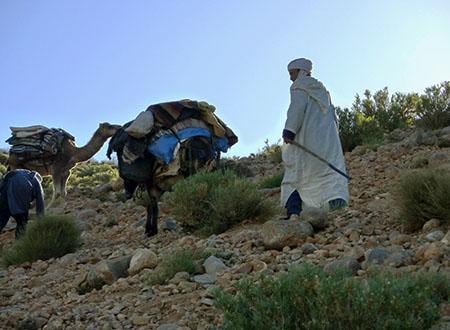 Randonnée transhumance avec les nomades du Maroc