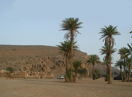 Fossiles du Maroc