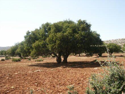 Balade au pays arganier