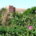excursion vallee des roses maroc