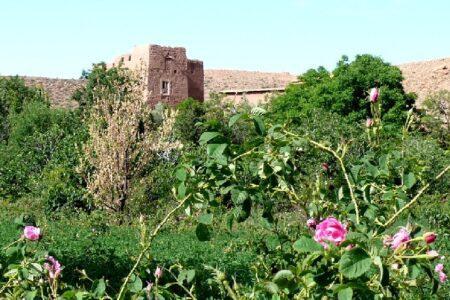 Vallee-des-roses-Maroc