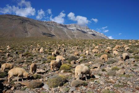 Vallées perdues et nomades de l'Atlas